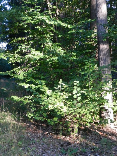 Waldbegehung