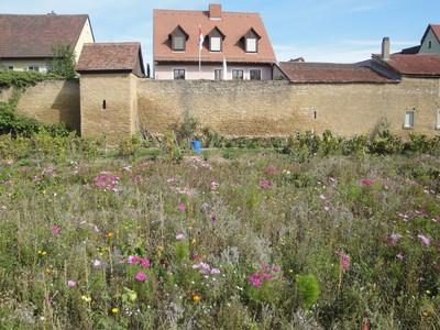 Grabengärten 2012