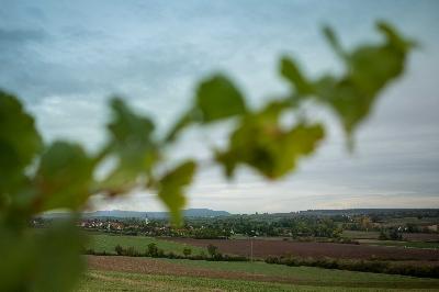 Blick auf Mainbernheim